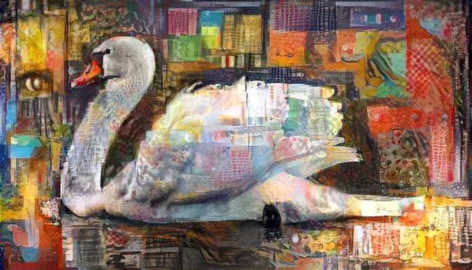 Swan_2431
