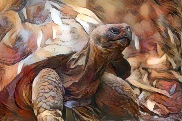 Turtle_2439