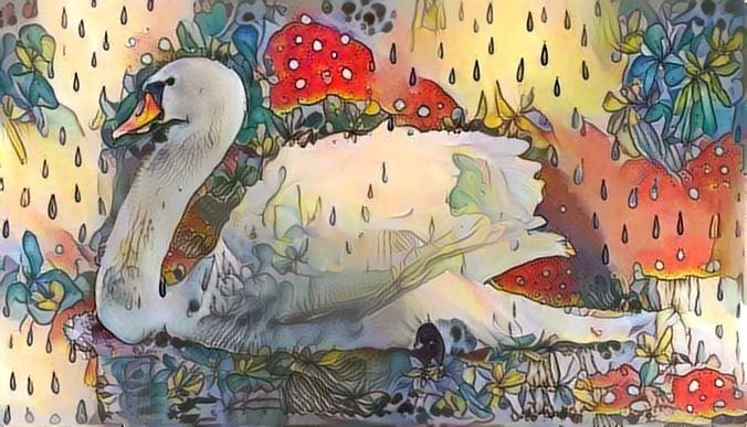 Swan_2452