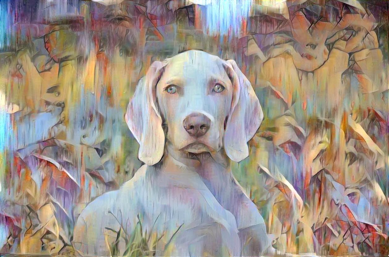 Dog_4490