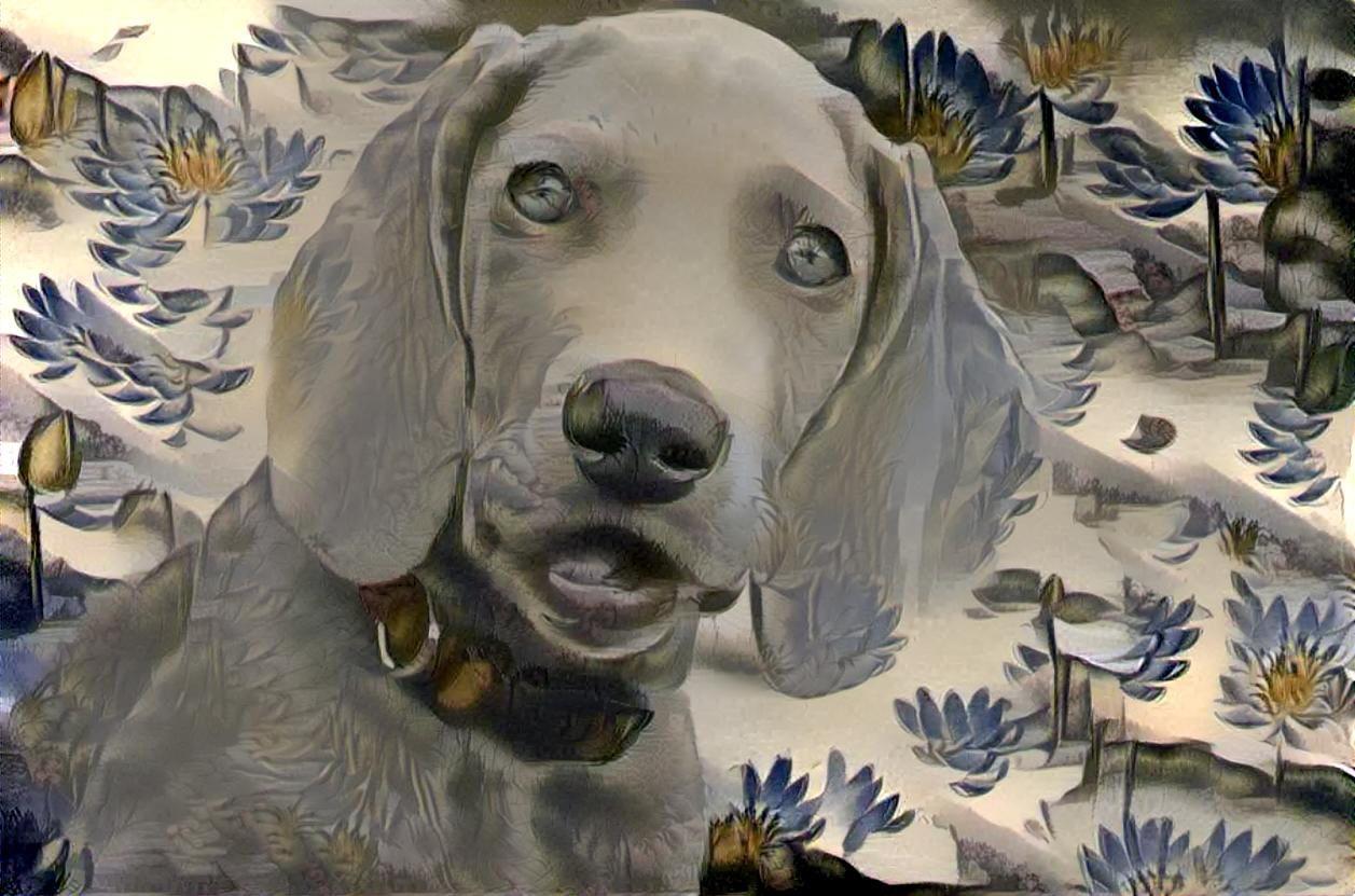 Dog_4492