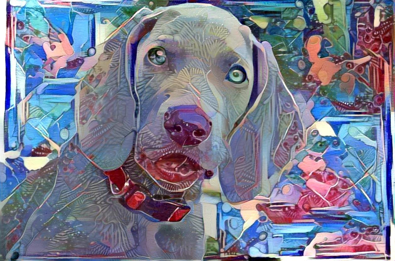 Dog_4493