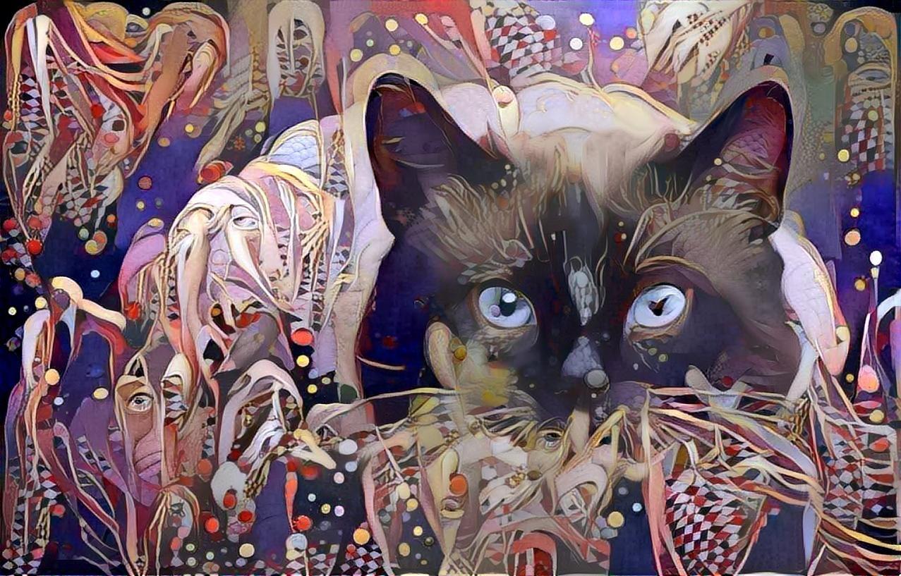 Cat_4528