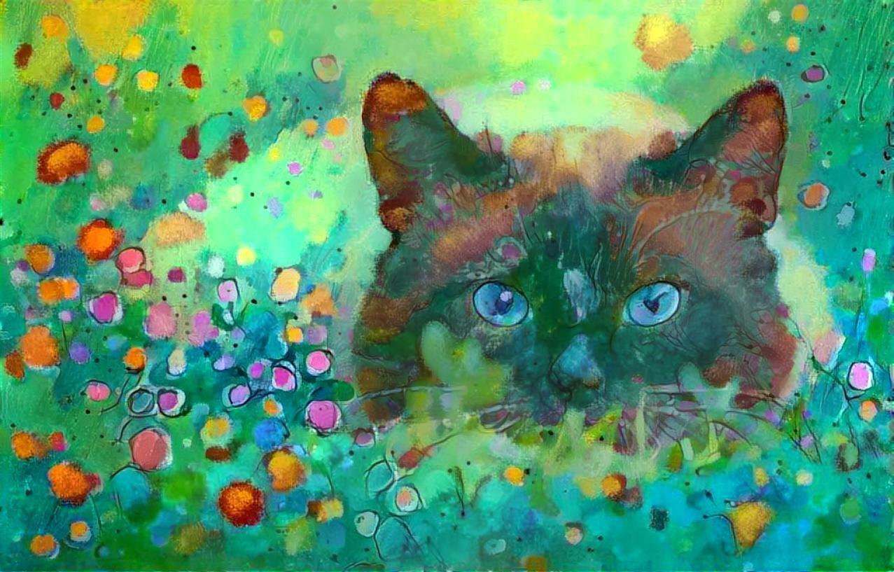 Cat _4653