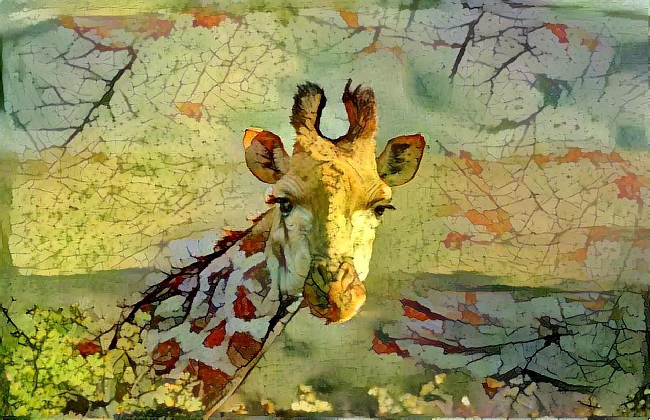 Giraffe _4692