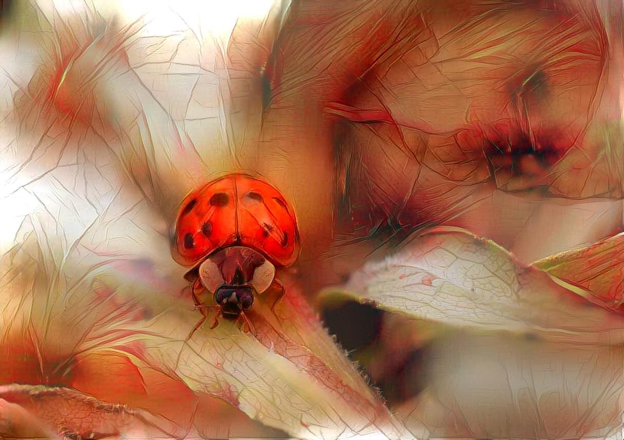Ladybug_4800