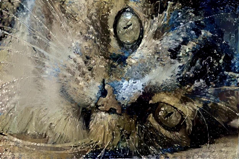 Cat_5164