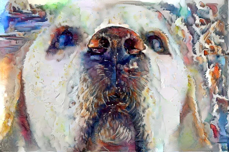 Dog_5396