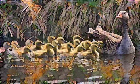 Ducks_5443