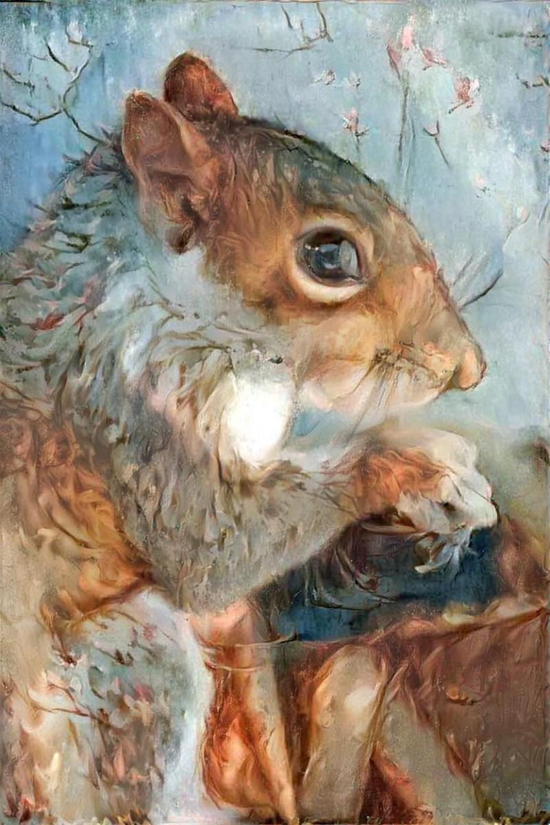 Squirrel _6215