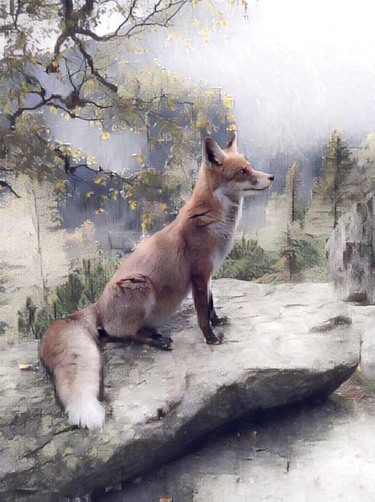 Fox_0793