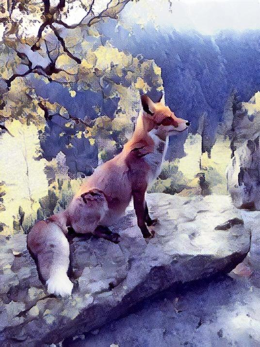 Fox_0795
