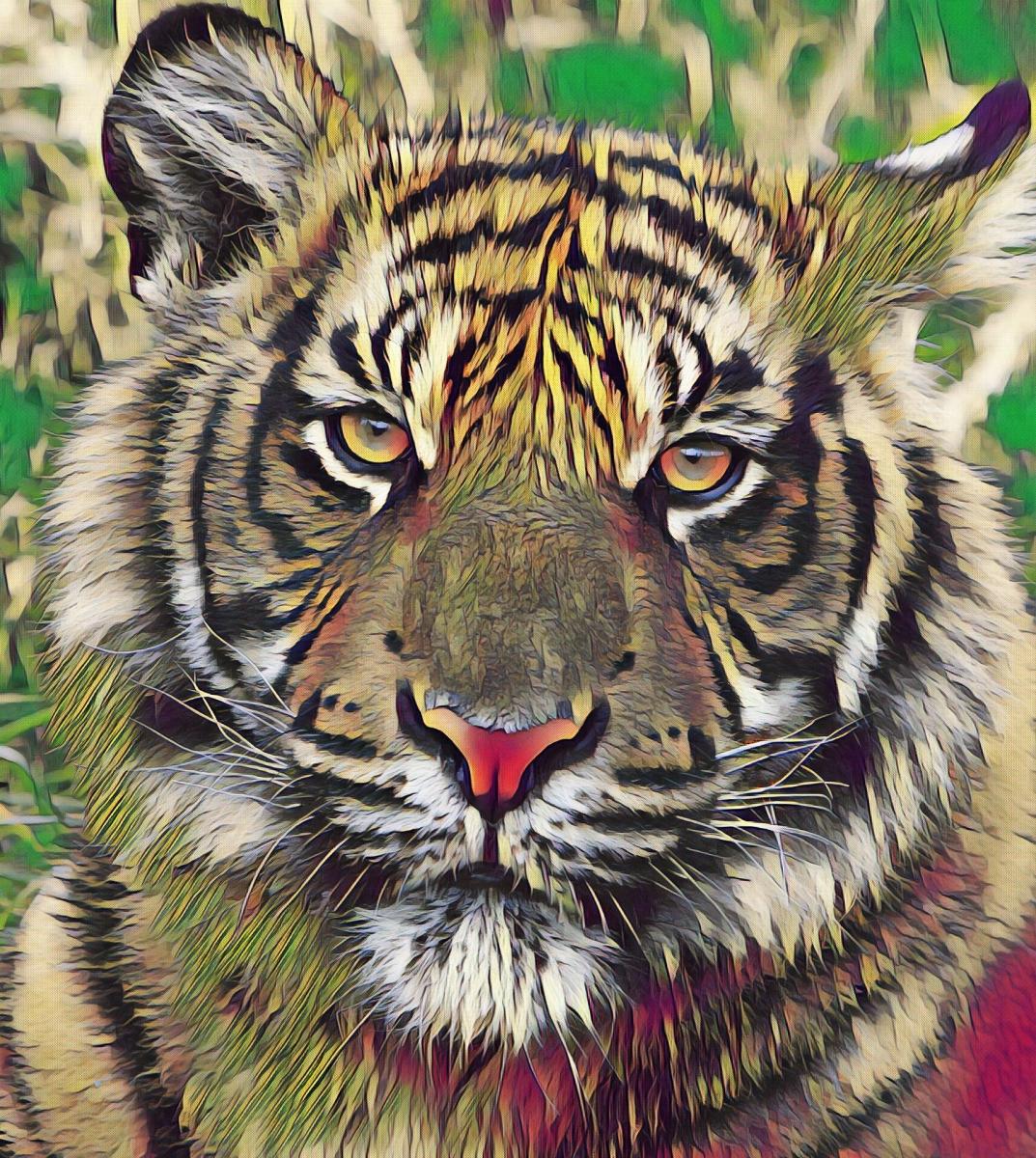 Tiger_0914