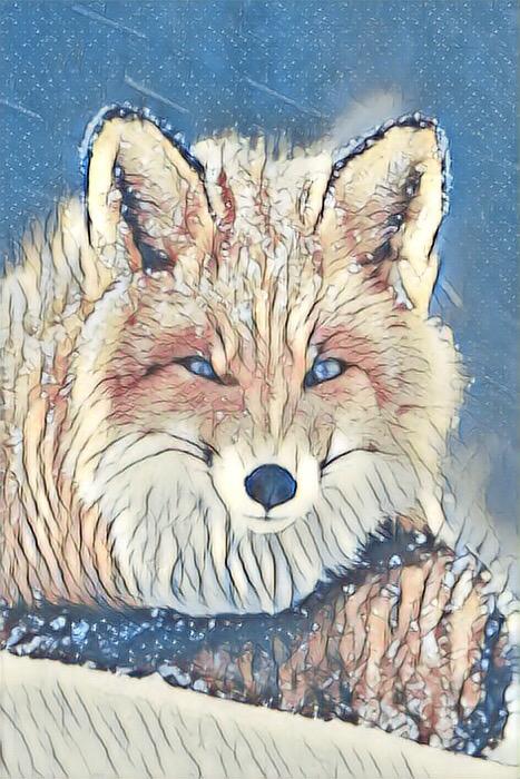 Fox_1103