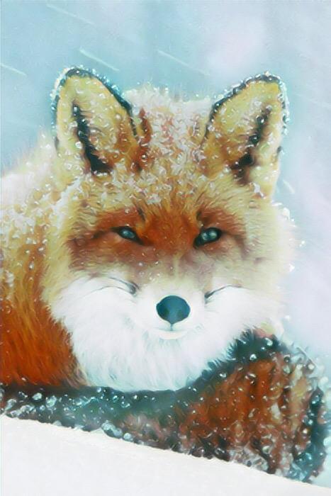 Fox_1104