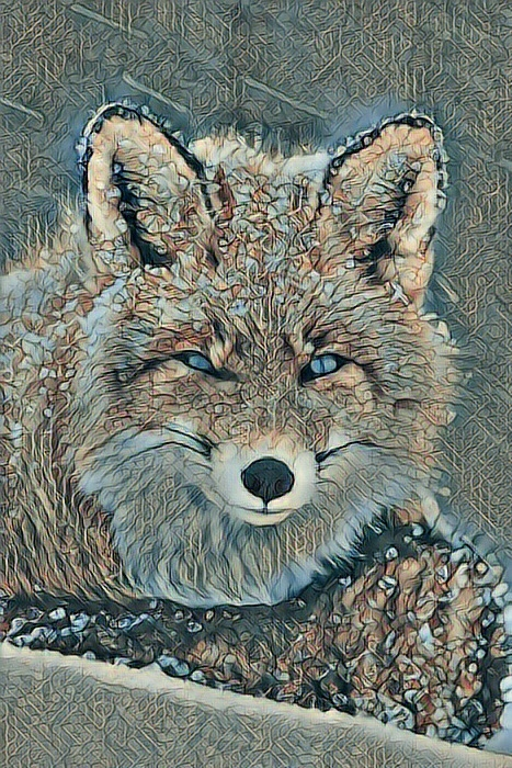 Fox_1105