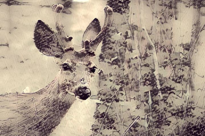 Deer_1212