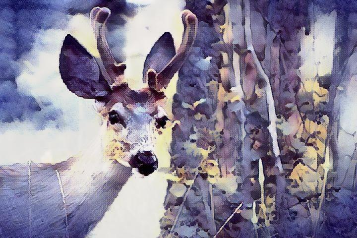 Deer_1215
