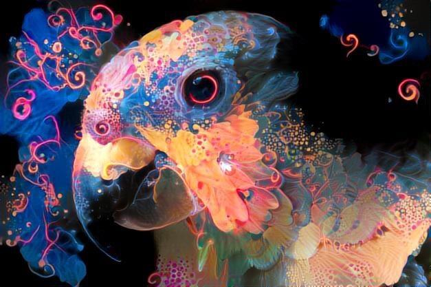 Parrot _2270