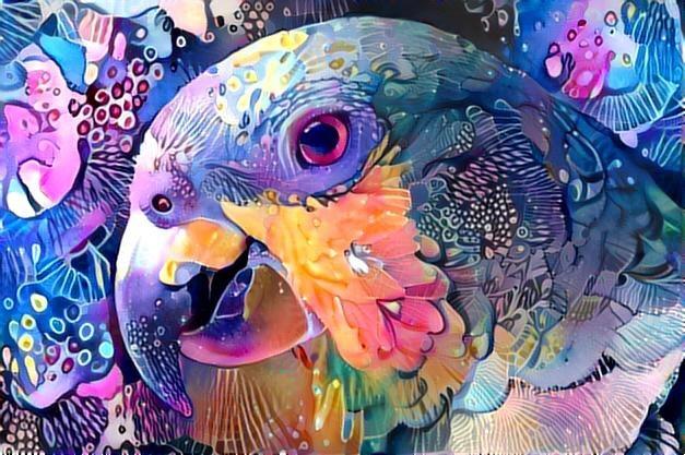 Parrot_2271
