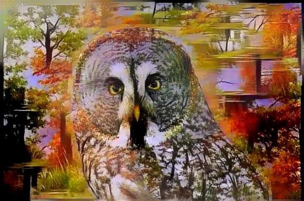 Owl_2412