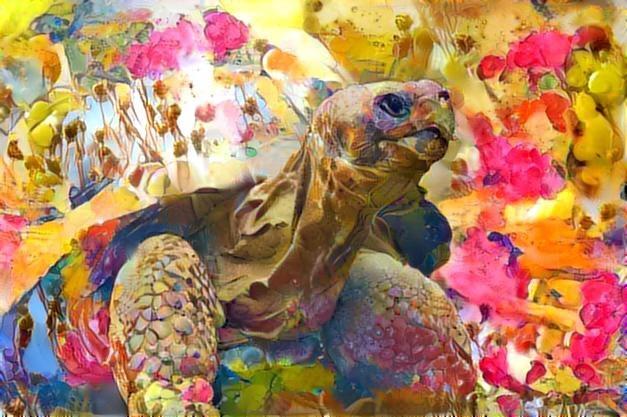 Turtle_2430