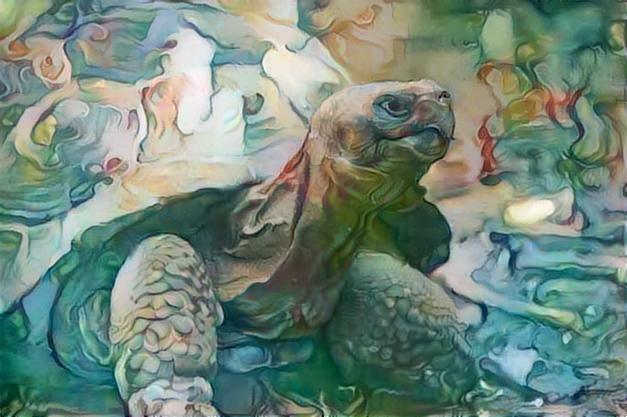 Turtle _2457