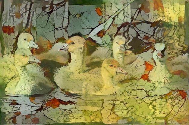 Ducks_2574