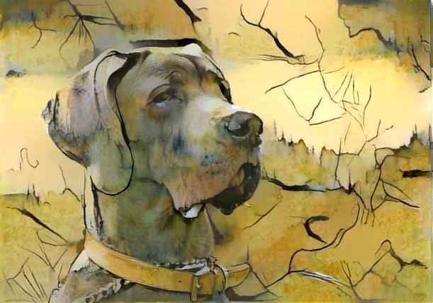 Dog_2578