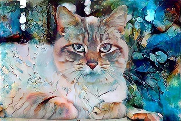 Cat_2702