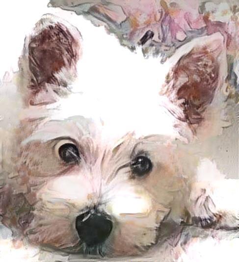 Dog_2908