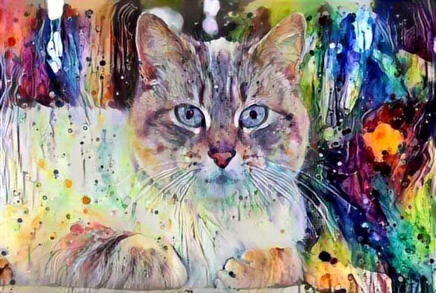 Cat_2932
