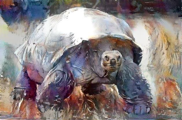 Turtle_3025