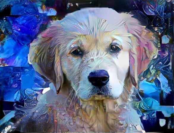 Dog_3026