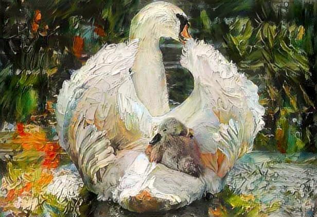 Swan_3032