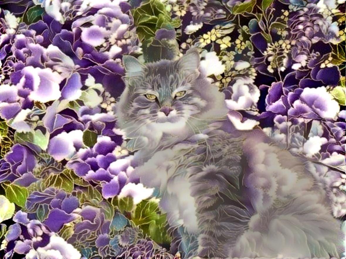 Cat _3517