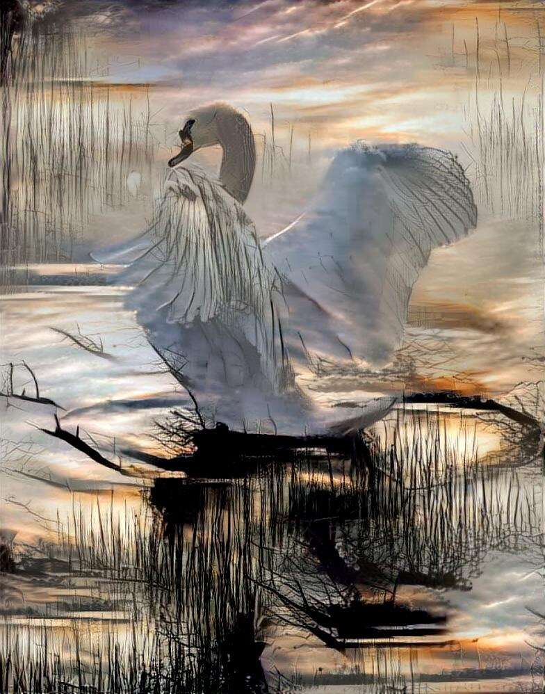 Swan_3677