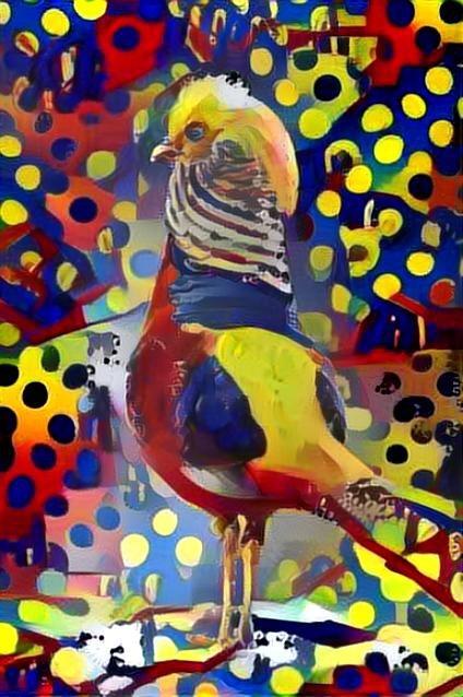 Bird_3685
