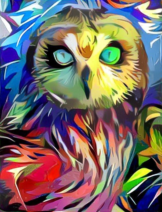 Owl_3701