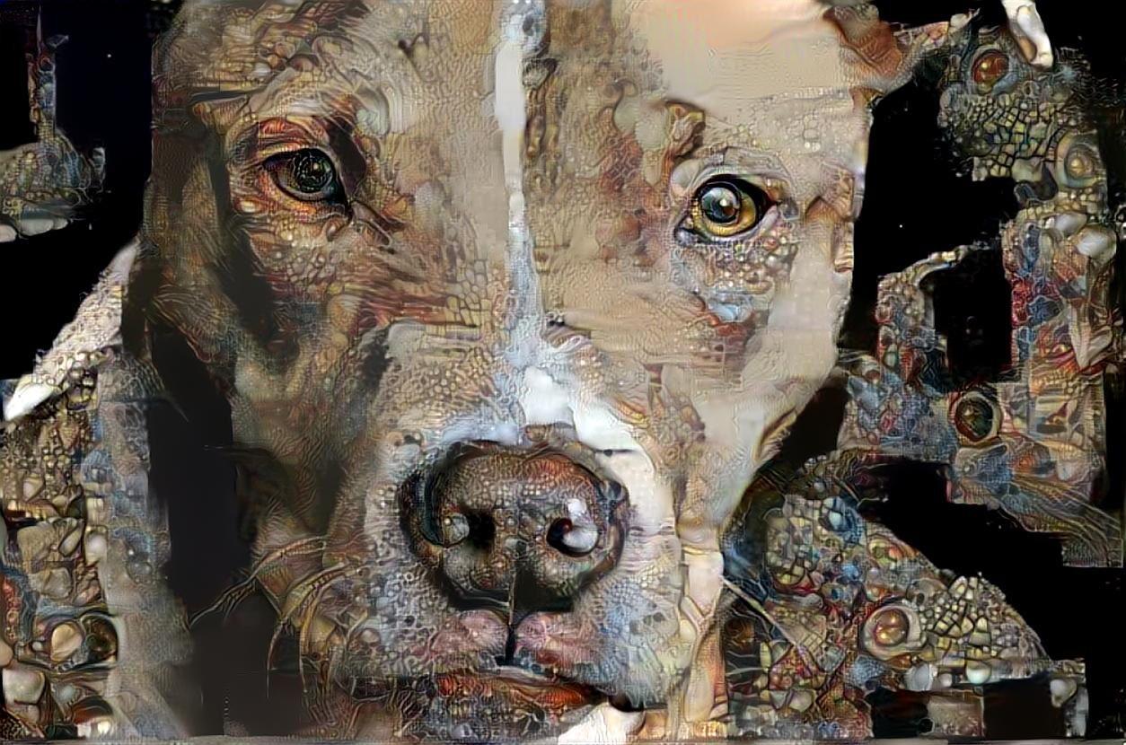 Dog_3865