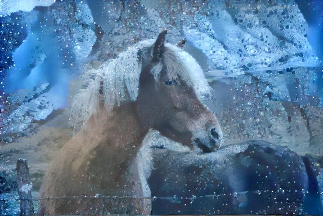 Horse_4058