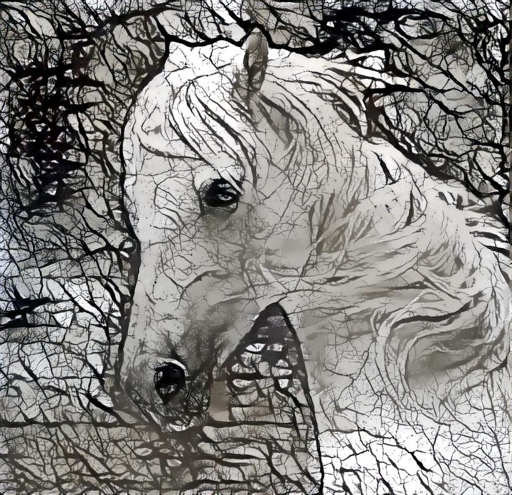 Horse_4063
