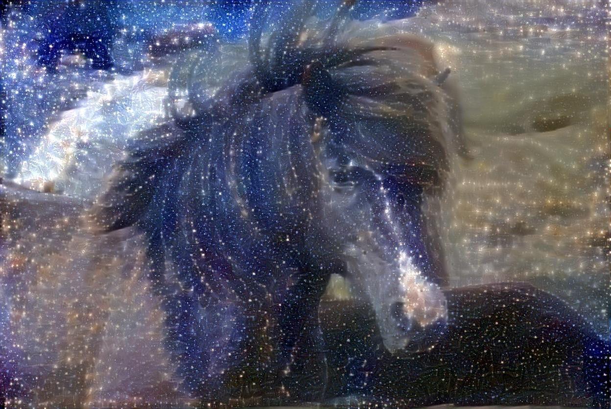 Pony_4074