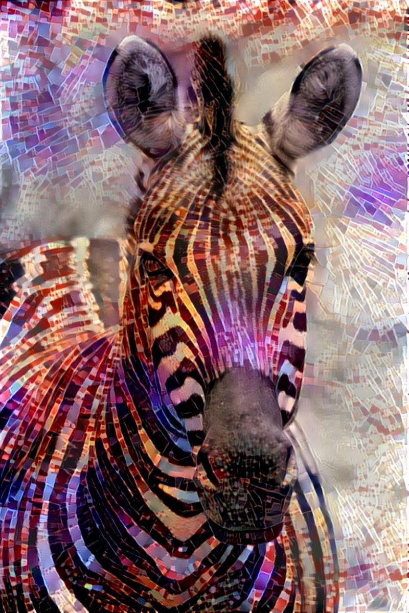 Zebra_4076