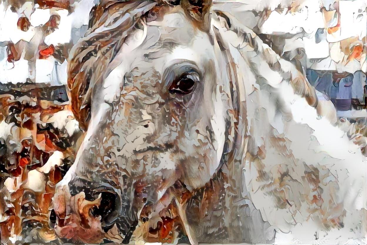 Horse_4094