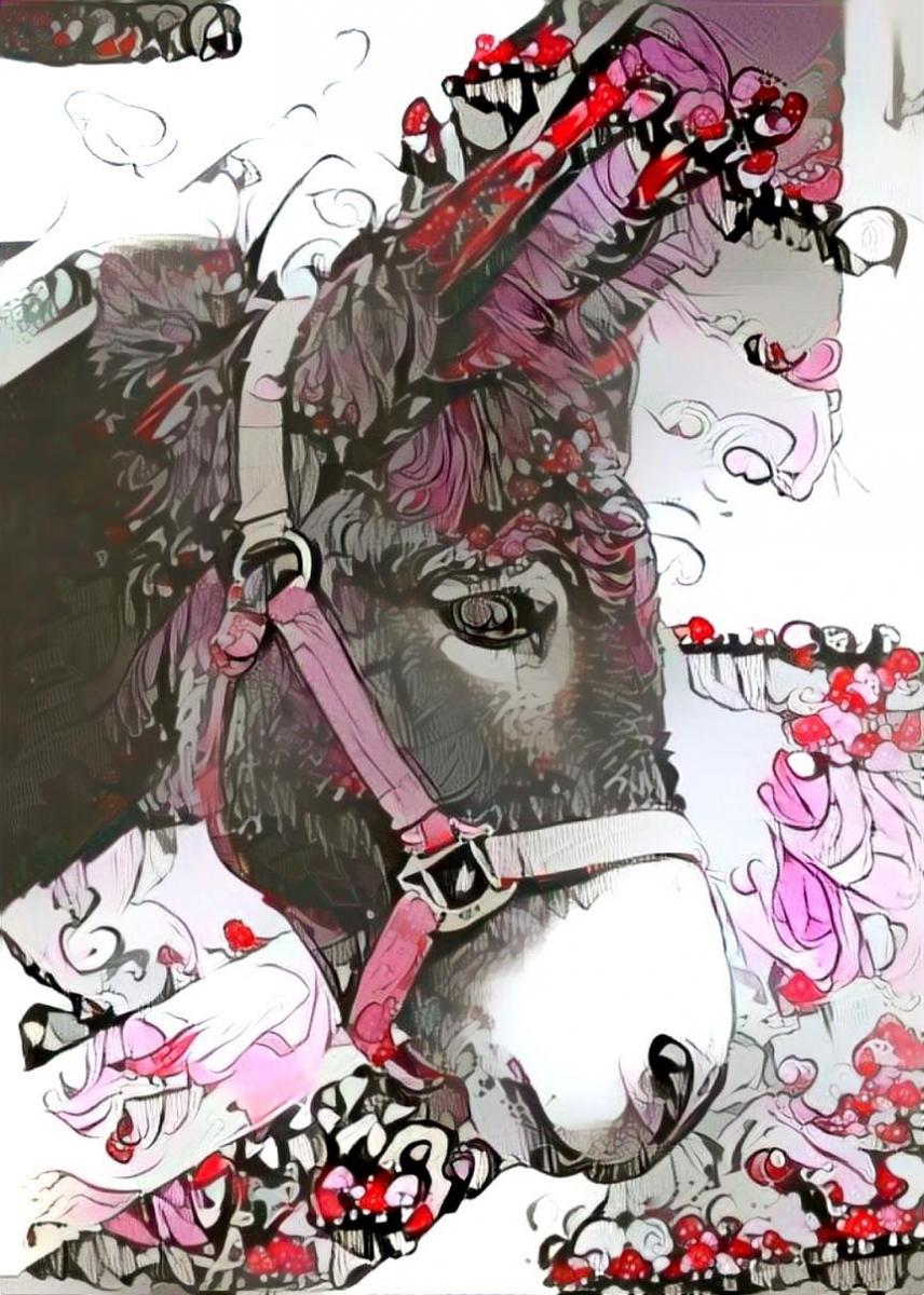 Donkey_4182