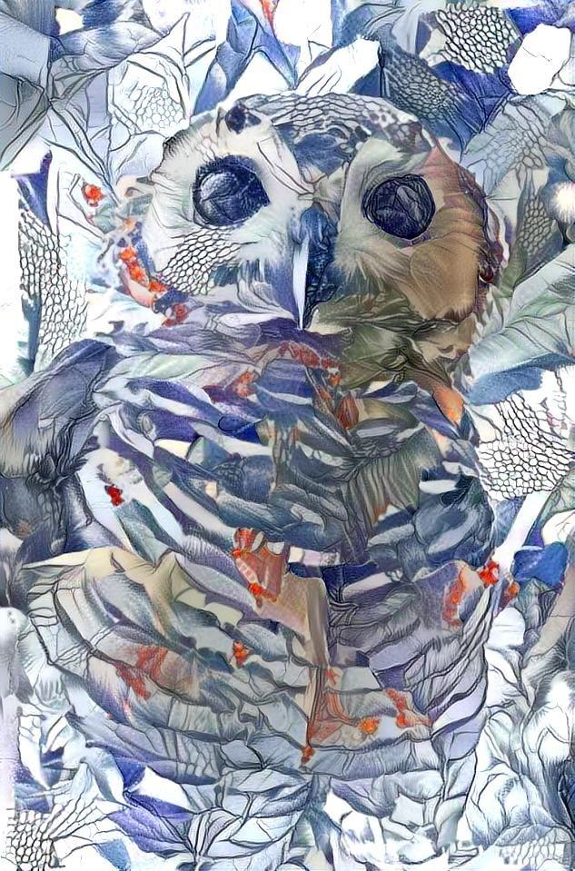 Owl_4281