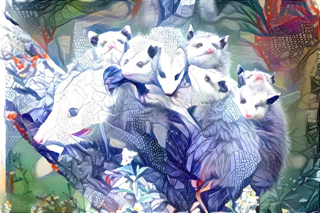 Opossum_4286