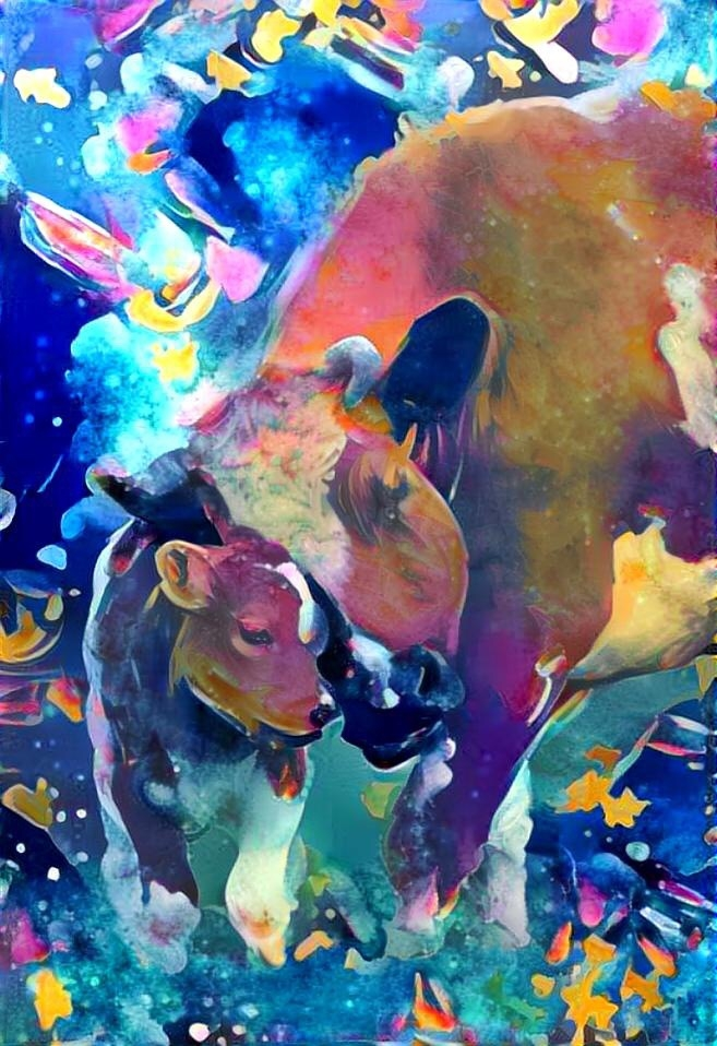 Cow_4371