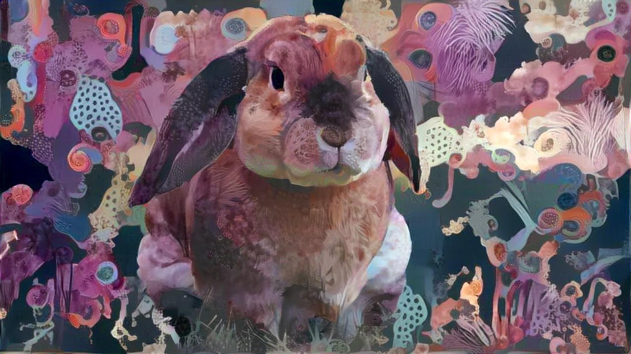 Rabbit _4425